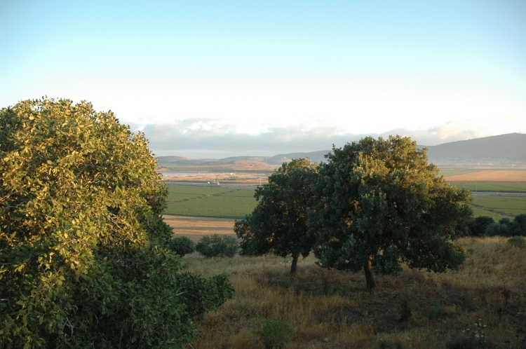 The Beit Netofa Valley from the hilltop of Shikhin.